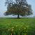 tölgy · reggel · köd · égbolt · fa · tavasz - stock fotó © joruba