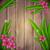 tropicales · plantas · exótico · flores · hojas · aislado - foto stock © jugulator