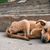 young stray dog sleeping stock photo © juhku