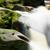 çağlayan · küçük · tropikal · Rainforest · doğa - stok fotoğraf © juhku