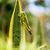 grasshopper on a leaf stock photo © juhku