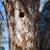 lege · nest · kinderen · groeiend · omhoog · familie - stockfoto © juhku