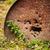 rusty oil barrel in forest stock photo © juhku