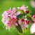 güzel · elma · ağacı · nazik · küçük · beyaz · çiçekler - stok fotoğraf © juhku