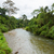jungle river in borneo stock photo © juhku