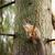 дерево · белку · сидят · филиала · парка · ЮАР - Сток-фото © juhku