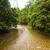 jungle river in borneo stock photo © juhku