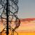 varázslatos · napfelkelte · fa · izolált · 3d · render · fű - stock fotó © juhku