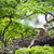 tigre · selva · masculino · assistindo · verde · cara - foto stock © juhku