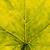 groen · blad · cel · structuur · macro · textuur · shot - stockfoto © juhku