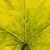 folha · verde · célula · estrutura · macro · textura · tiro - foto stock © juhku