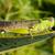 sprinkhaan · klein · kleurrijk · vergadering · menselijke · hand · selectieve · aandacht - stockfoto © juhku