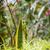 кузнечик · трава · животного · ошибка · исследований · антенна - Сток-фото © juhku