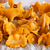 bunch chanterelle drying on a piece of paper stock photo © Juhku