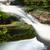 vízesés · kicsi · sűrű · trópusi · esőerdő · természet - stock fotó © juhku