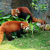 two cute red pandas eating bamboo stock photo © juhku