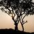 fa · sziluett · drámai · naplemente · Afrika · Kenya - stock fotó © juhku