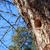 lege · nest · afbeelding · gras - stockfoto © juhku