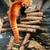 красный · Panda · зоопарке · любопытный · каменные · китайский - Сток-фото © juhku