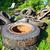 halom · öreg · autógumik · újrahasznosítás · növény · Thaiföld - stock fotó © juhku