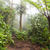 profonde · luxuriante · brumeux · forêt · tropicale · la · Costa · Rica - photo stock © juhku