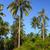 camino · de · tierra · tropicales · forestales · sol · brillante · paisaje - foto stock © juhku