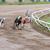 tazı · köpekler · yarış · kum · izlemek · köpek - stok fotoğraf © juhku