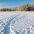 заморожены · озеро · снега · покрытый · лес · Солнечный - Сток-фото © juhku