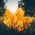 verlicht · groot · blad · aderen · textuur - stockfoto © juhku