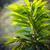 cascalho · planta · pormenor · grande · homem · indústria - foto stock © juhku