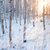 huş · ağacı · orman · güneş · ışık · kış · sıcak - stok fotoğraf © juhku