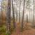 foggy morning sun light forest stock photo © juhku