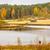 piękna · jesienią · krajobraz · widoku · drzewo - zdjęcia stock © juhku