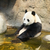 giant panda sitting in water stock photo © juhku