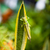 グラスホッパー · マクロ · ショット · ブレード · 草 · 固体 - ストックフォト © juhku