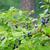 blueberries at home garden stock photo © juhku