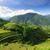 風景 · 写真 · コメ · 中国 · 垂直 · 壁 - ストックフォト © juhku