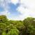 rainforest in monteverde cloud forest reserve stock photo © juhku