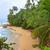 strand · rock · water · boom · zee · palm - stockfoto © juhku