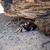 krab · gat · zand · abstract · natuur · bal - stockfoto © juhku