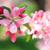 elma · ağacı · çiçek · bahar · ağaç · bahar · güzellik - stok fotoğraf © juhku