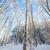 huş · ağacı · ahşap · orman · kapalı · kar · kış - stok fotoğraf © juhku