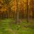 美しい · 光 · スプルース · 森林 · 夜明け · 自然 - ストックフォト © juhku