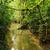 kicsi · folyó · zöld · erdő · tavasz · tájkép - stock fotó © juhku