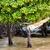 морской · пейзаж · деревья · тропические · побережье · воды · дерево - Сток-фото © juhku