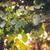 grapes in vine stock photo © juhku