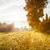 ősz · liget · csodálatos · őszi · arany · levelek - stock fotó © juhku