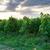 Germania · view · città · skyline · panorama · torre - foto d'archivio © juhku