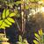 levelek · napfény · fényes · erős · zöld · fa - stock fotó © juhku