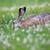 ウサギ · 食べ · 草 · 市 · 公園 · 春 - ストックフォト © juhku